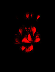 Red flower on black background. Painting and computer collage.