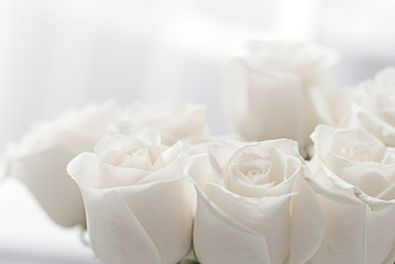 white roses close-up Wall mural