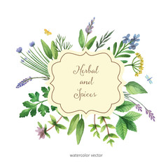 Watercolor vector hand painted banner with herbs and spices.
