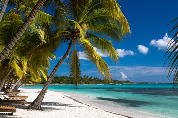 Tropical beach in caribbean sea, Saona island, Dominican Republic Wall mural