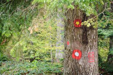 Hiking marks on tree