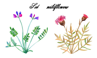 Set wildflowers. isolated. watercolor.