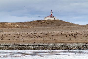 Magellan penguin colony on Isla Magdalena island, Chile
