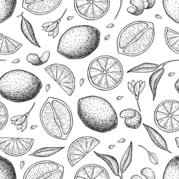Vector hand drawn lime and lemon seamless pattern.