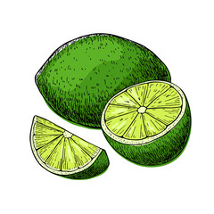 Vector hand drawn lime fruit with sliced peaces.