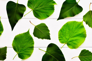 Green leaves on a white wooden background. The leaves of different trees. Background of leaves