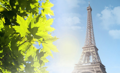 Eiffel Tower and green tree in the morning