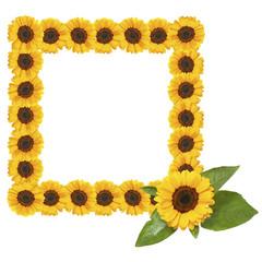 sunflower frame on white