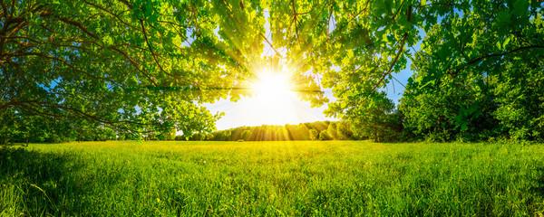 In de dag Weide, Moeras Von Bäumen umgebene Wiese bei Sonnenschein