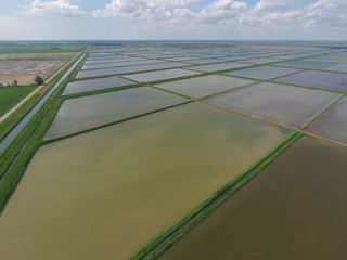 Flooded rice paddies. Agronomic methods of growing rice in the fields.