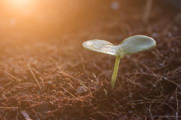 Sapling, sunlight, plant material.