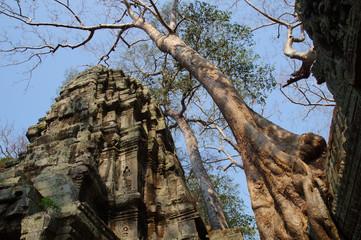 Old Trees and Ruins of Temple at Angkor Wat, Cambodia
