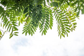 Leaf nature background.