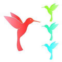 Colibri, hummingbird, isolated on white, vector illustration