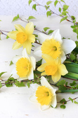 spring flowers daffodils birch branches white background