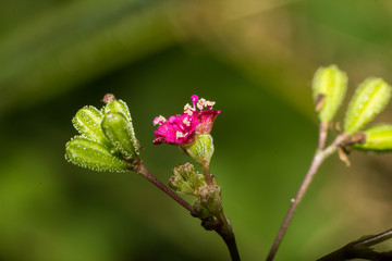 Macro photography showing a a pink flower