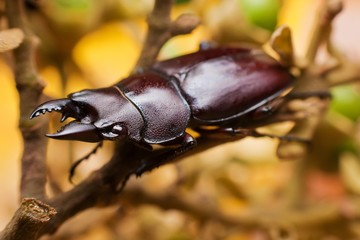 Macro photography showing a bettle
