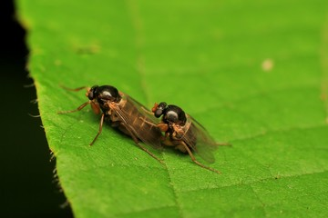 Macro photography showing mating insect