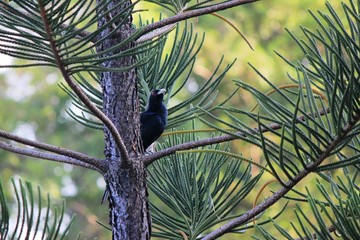 Macro photography showing a black bird resting on a tree