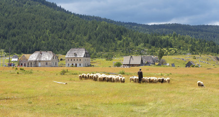 Herdsman with Flock of Sheeps, Montenegro