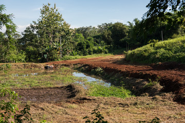 Agriculture in Chiang Rai