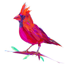 The cute red cardinal exotic bird