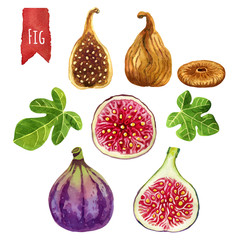 Figs, watercolor illustration, vector clipping paths included