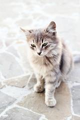 Grey cat sitting on stone floor