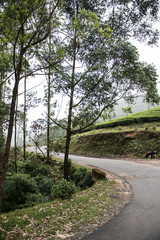 Road to Rajamala Hills