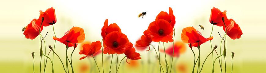 Maczki i pszczółki