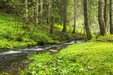 Green forest vegetation with creek flowing