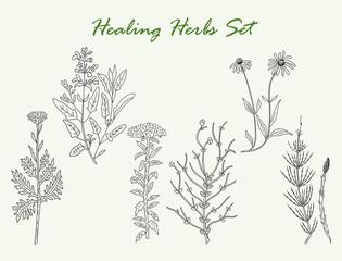 healing herbs set