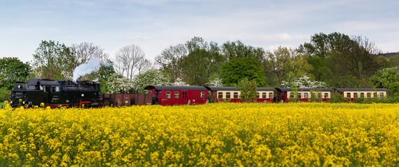 Selketalbahn bei Gernrode im Harz mit Rapsfeld