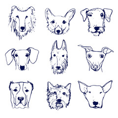 Collection of dog heads in sketched style. Made in vector.