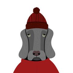 Sad cartoon dog in hat on white background. Cartoon vector illustration. Isolated. Weimaraner.