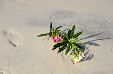 Flowers Laying on the Beach