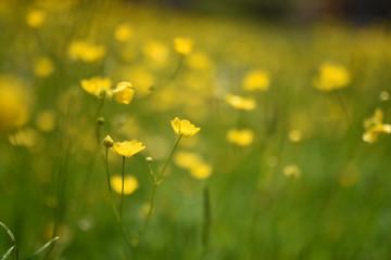 Sfondo tutto giallo