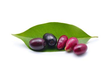 Jambolan plum, Java plum on white background