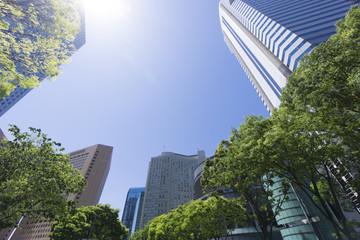 青空 新緑 新宿高層ビル街 見上げる 太陽 フレア超広角 コピースペース