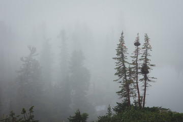 Forested mountain slope in low lying cloud with the evergreen co