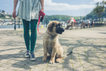 Woman standing in the street with puppy