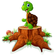 Cute turtle sit on tree stump