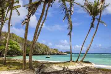 Bequia - rajska plaża z palmami