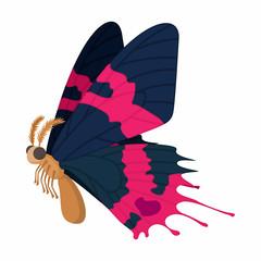 Dark blue-pink butterfly icon, cartoon style
