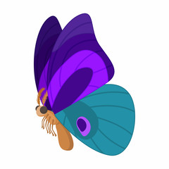 Purple-blue butterfly icon, cartoon style