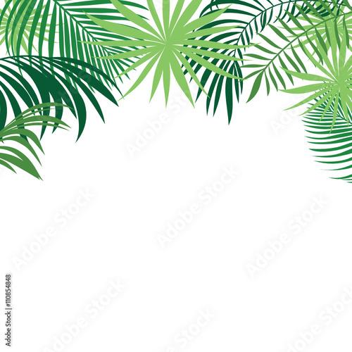 tropical palm leaf wallpaper