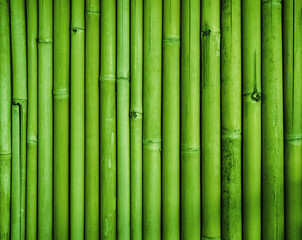 Green bamboo fence texture, bamboo background, texture background, bamboo forest