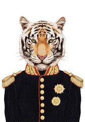 Portrait of Tiger in military uniform. Hand-drawn illustration, digitally colored.