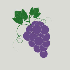 Brunch of grape with leaves, flat vector icon