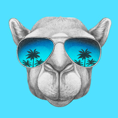 Portrait of Camel with mirror glasses. Hand drawn illustration.